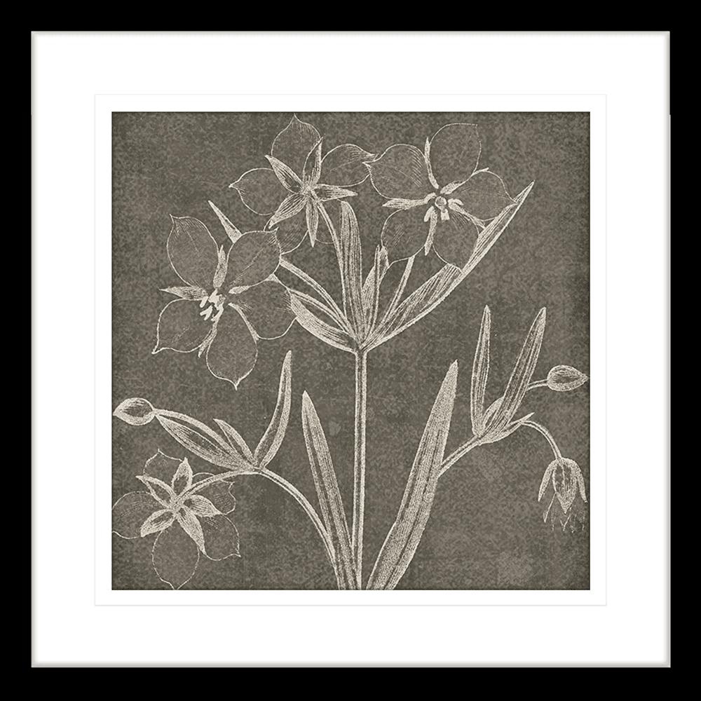 Botanical Beauty Chalk | Framed Art | Wall Art Gold Coast | Wallpaper | Innovate Interiors