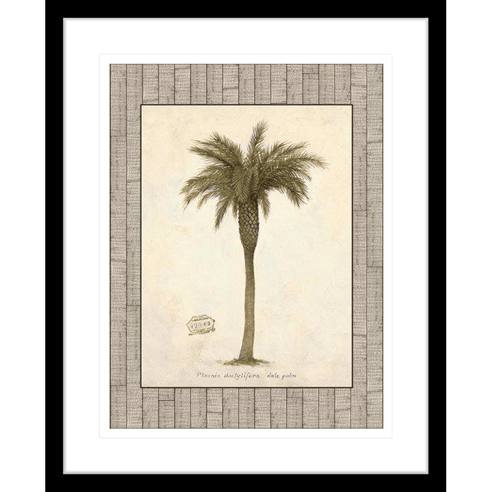 'Date Palm' Palm Illustration | Framed Art | Wall Art Gold Coast | Wallpaper | Innovate Interiors