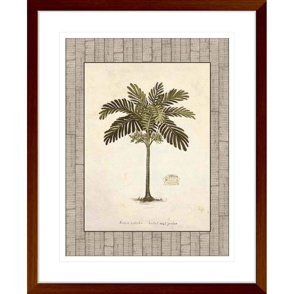 Nut Palm' Palm Illustration | Framed Art | Wall Art Gold Coast | Wallpaper | Innovate Interiors