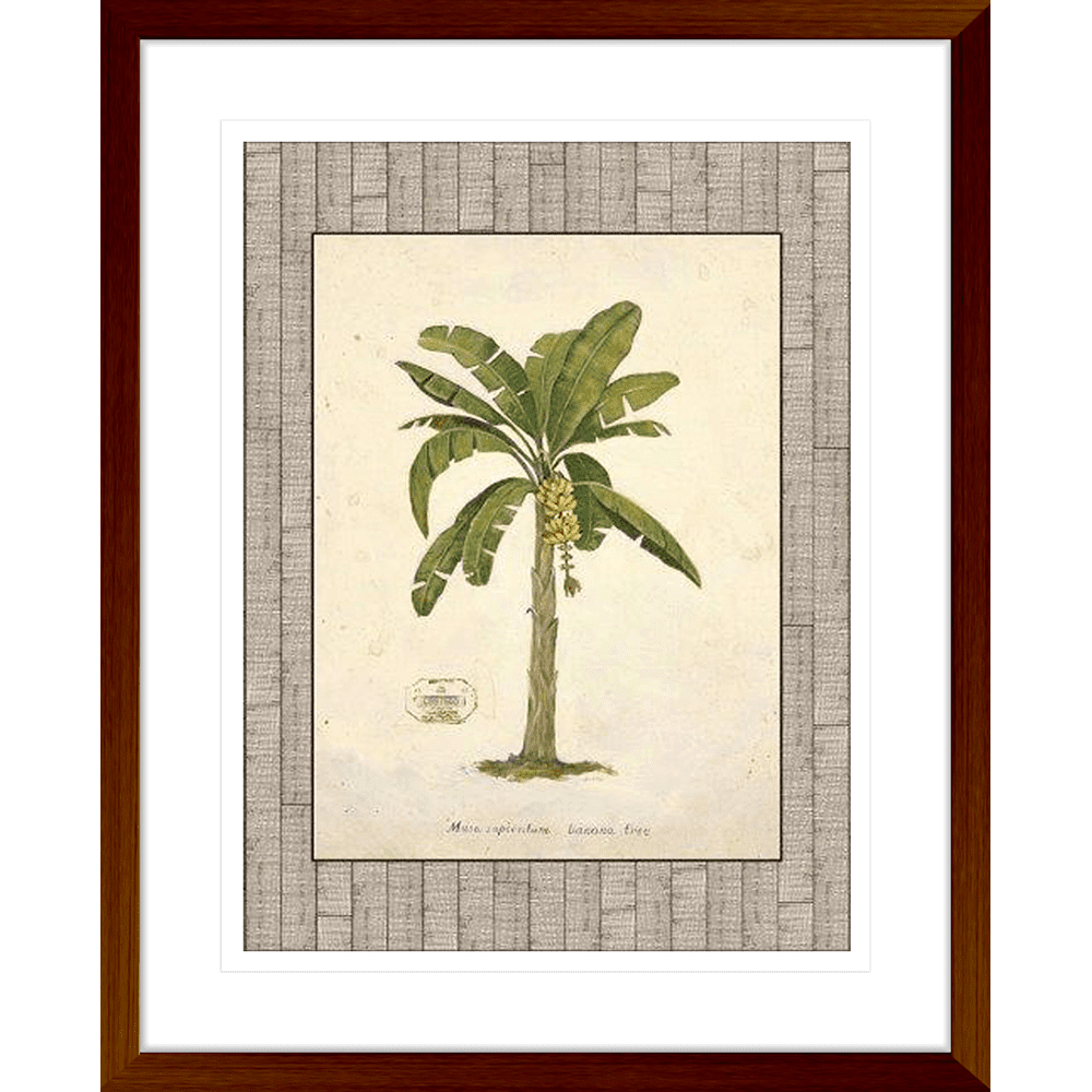 'Banana Palm' Palm Illustration | Framed Art | Wall Art Gold Coast | Wallpaper | Innovate Interiors