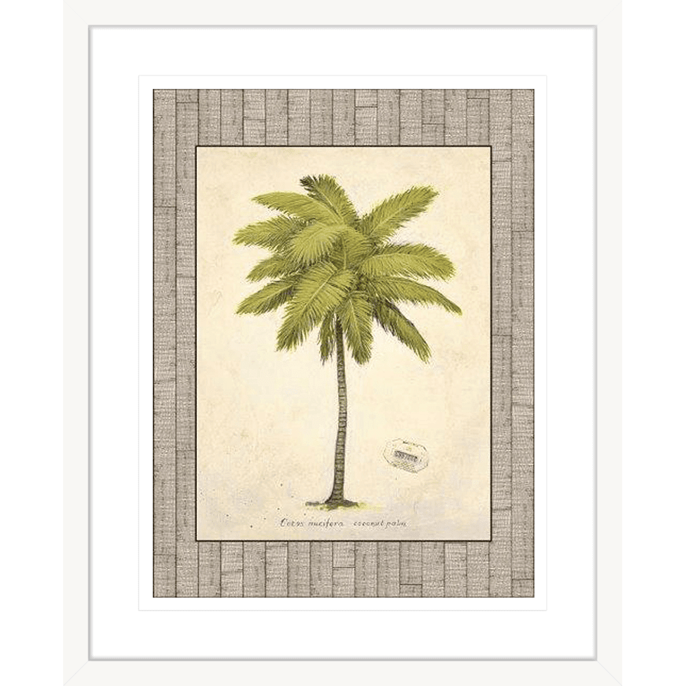 'Coconut Palm' Palm Illustration | Framed Art | Wall Art Gold Coast | Wallpaper | Innovate Interiors