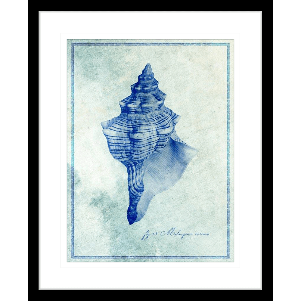 Marine Species | Framed Art | Wall Art Gold Coast | Wallpaper | Innovate Interiors