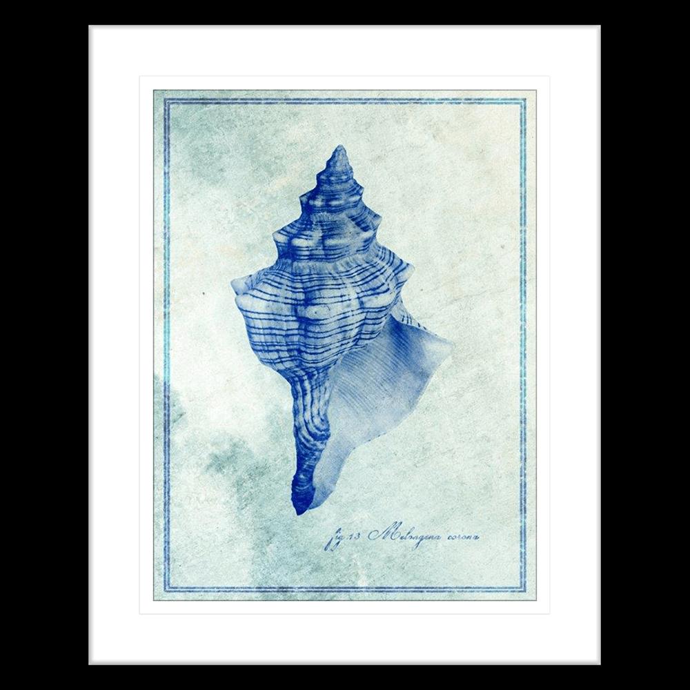 Marine Species | Framed Art | Wall Art Gold Coast | Wallpaper | Innovate Interiors