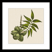 Nature's Harvest Collection - HARV01 - Framed Art Print Black