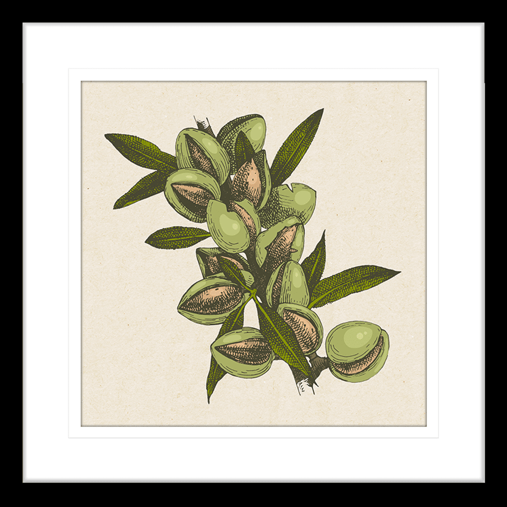 Nature's Harvest | Framed Art | Wall Art Gold Coast | Wallpaper | Innovate Interiors
