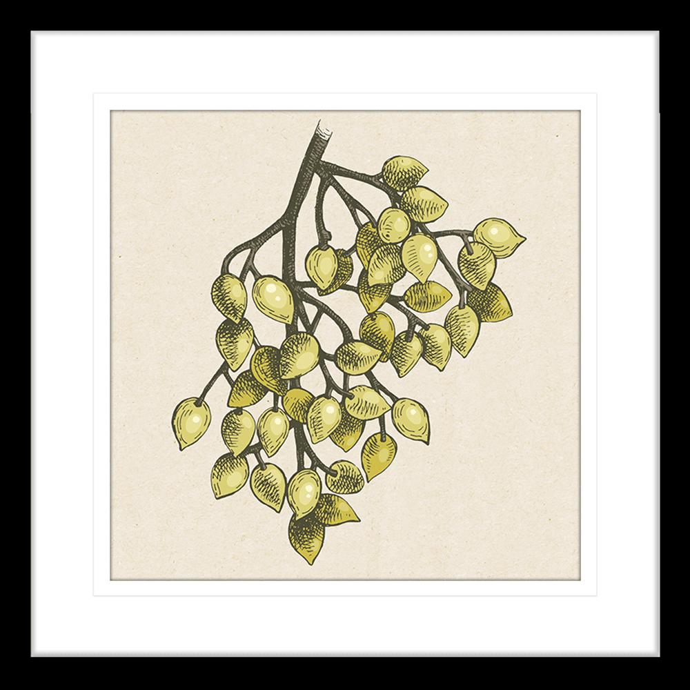 Nature's Harvest | Framed Art | Wall Art Gold Coast | Wallpaper | Innovate Interiors