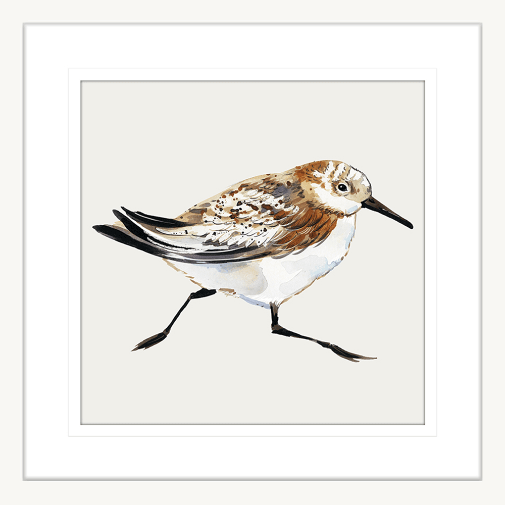 Sandpiper Cove Collection - SAND02 - Framed Art Print White