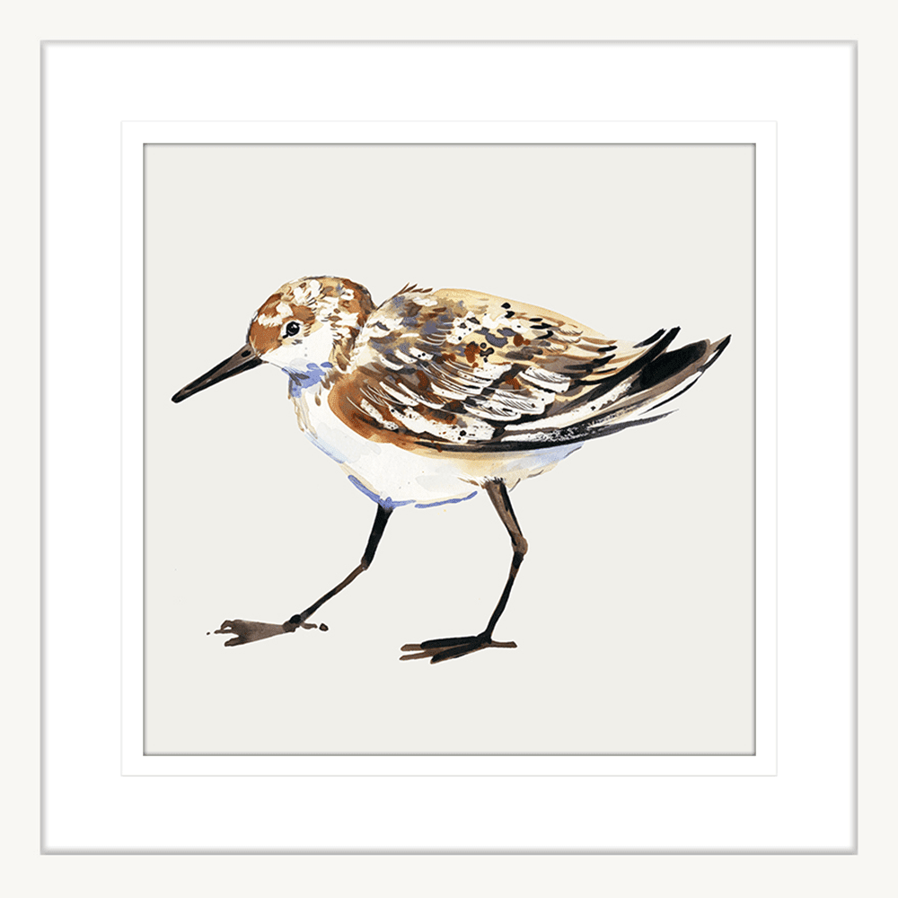Sandpiper Cove Collection - SAND03 - Framed Art Print White