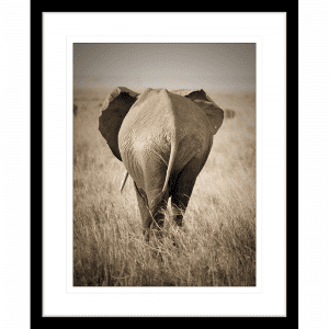Toto African Animals 16 | Framed Artwork Black