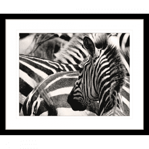 Toto African Animals 17 | Framed Artwork Black
