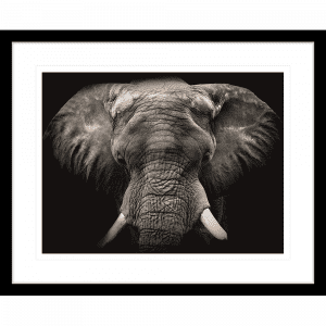 Toto African Animals 18 | Framed Artwork Black