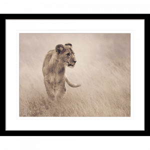 Toto African Animals 19 | Framed Artwork Black