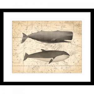 Whale Constellation 01 | Black Framed Artwork