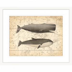 Whale Constellation 01 | White Framed Artwork
