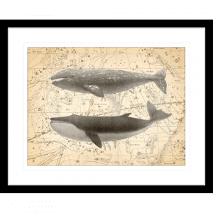 Whale Constellation 02 | Black Framed Artwork