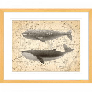 Whale Constellation 02 | Oak Framed Artwork