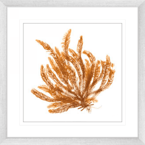 Pacific Sea Moss 02 | Silver Framed Artwork