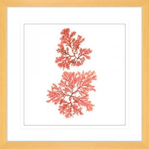 Pacific Sea Moss 03 | Oak Framed Artwork