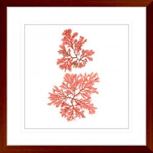 Pacific Sea Moss 03 | Teak Framed Artwork