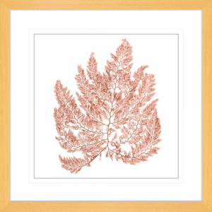 Pacific Sea Moss 04 | Oak Framed Artwork