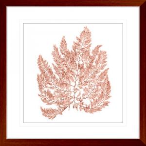 Pacific Sea Moss 04 | Teak Framed Artwork