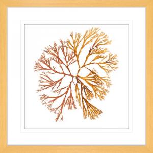 Pacific Sea Moss 05 | Oak Framed Artwork