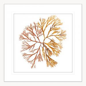 Pacific Sea Moss 05 | White Framed Artwork