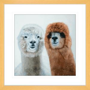 Lovable Llamas 01 | Oak Framed Artwork