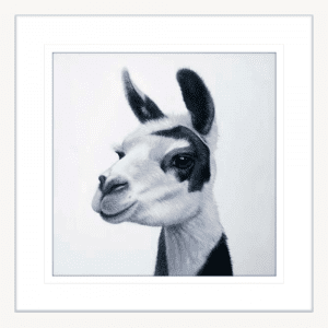 Lovable Llamas 02 | White Framed Artwork