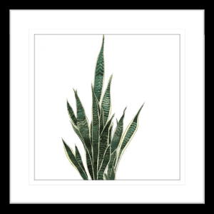 Green Thumb 02 | Black Framed Artwork