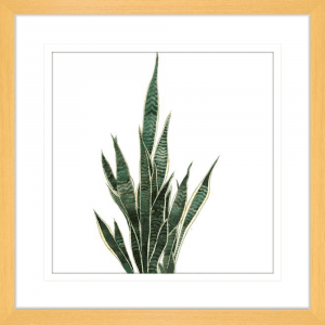 Green Thumb 02 | Oak Framed Artwork