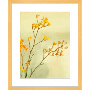 Kangaroo Paw 01 | Oak Framed Artwork