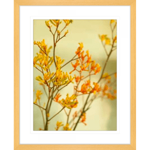 Kangaroo Paw 02 | Oak Framed Artwork