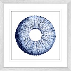 Urchin Shell 01 | Silver Framed Artwork