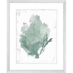 Teal Delicate Coral 01 | Silver Framed Artwork